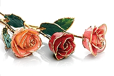 Roses | Coral, Red, and Pink Gold-Dipped Roses