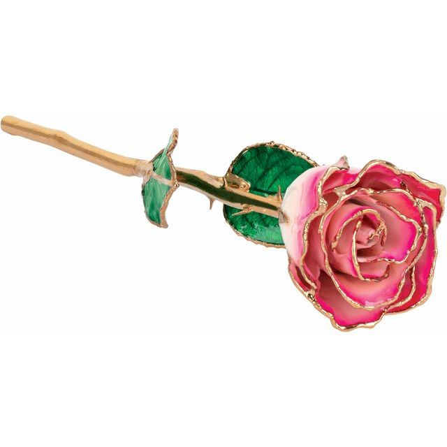 Lacquered Cream Magenta Rose with Gold Trim