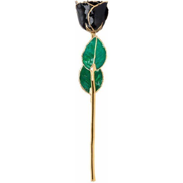 Lacquered Black Rose with Gold Trim
